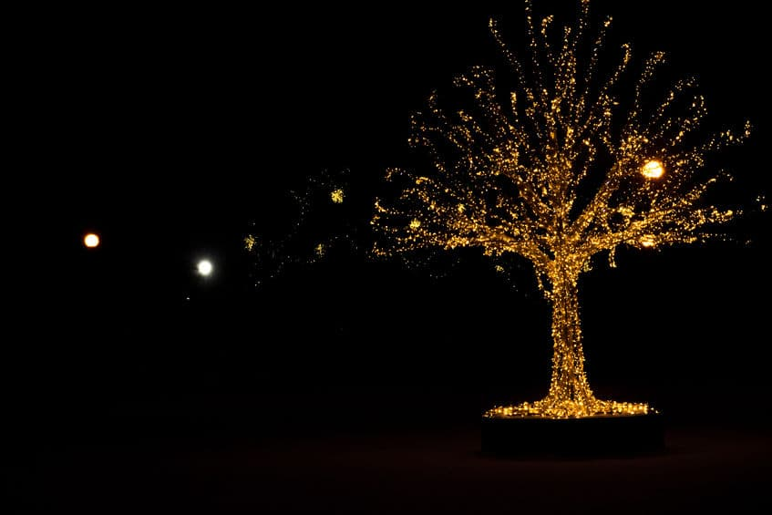 Lights on tree outdoors